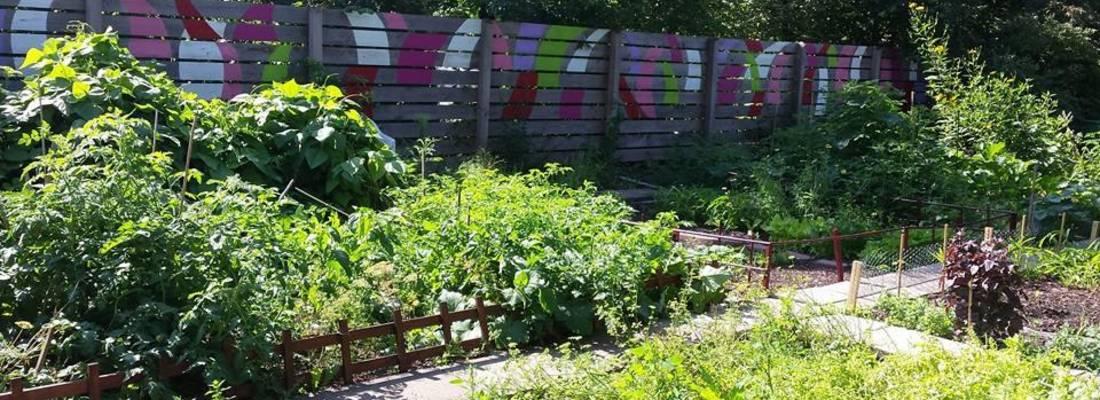 bepflanzte Beete im Interkultureller Garten ©Stadt Laatzen