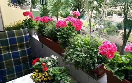 Balkon mit schöner Bepflanzung