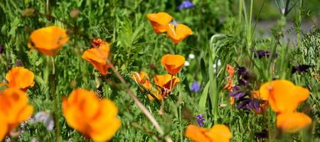 Blüten auf einer Blumenwiese