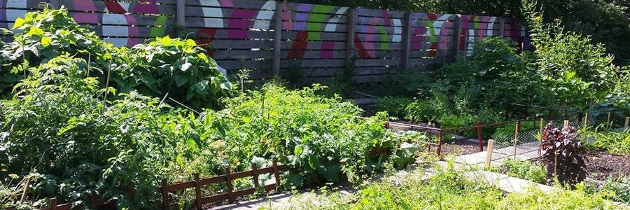 bepflanzte Beete im Interkultureller Garten